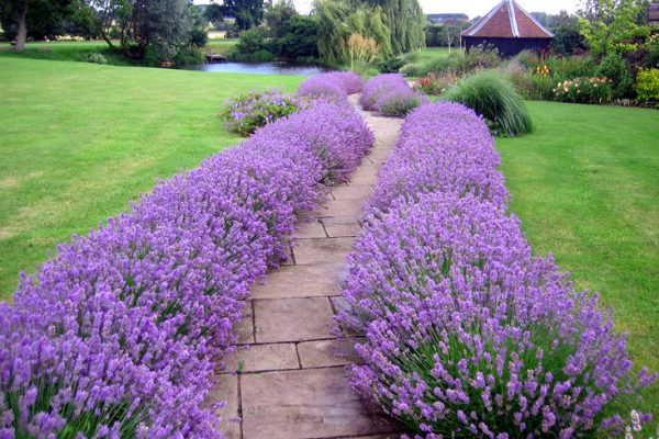 garden paths and paving lavender pond