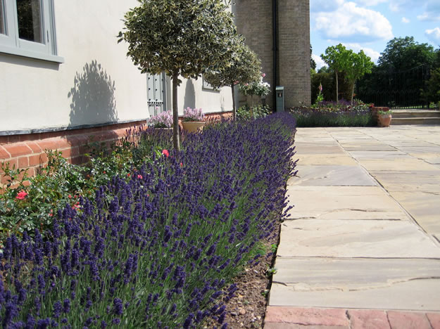 planting and soft landscaping borders