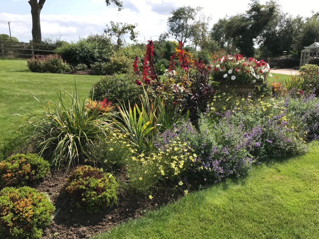 planting and soft landscaping flower and shrubs